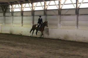 Danielle on Hamilton in Walk Trot
