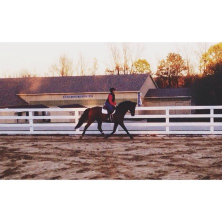 Let's all take a moment to appreciate my horse's trot 💁 And not acknowledge that I have instagrammed three times today🙈