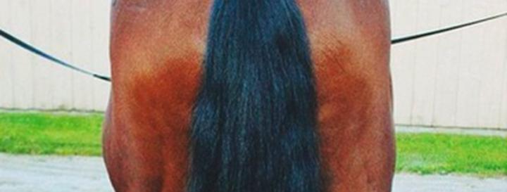 Tail Care à laAx