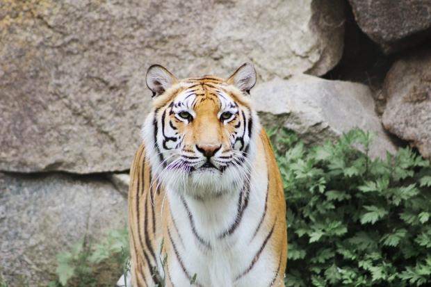 2Southwick Zoo 028-2