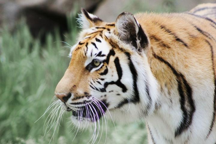 2Southwick Zoo 032-2