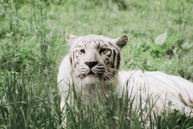 2Southwick Zoo 055-2