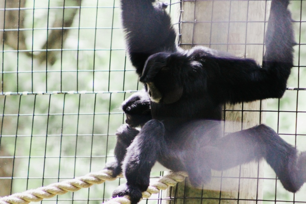 2Southwick Zoo 081-2