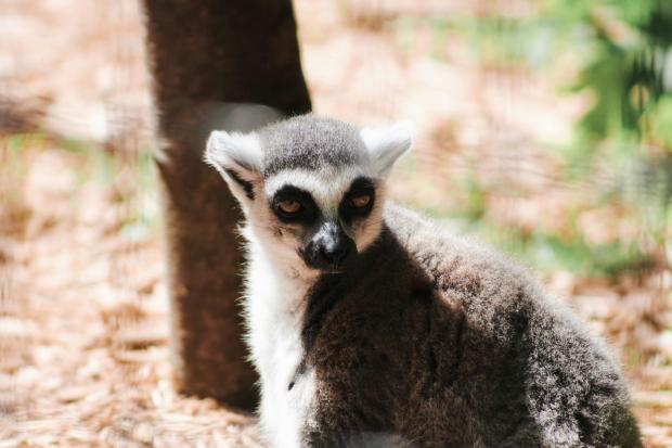 2Southwick Zoo 123-2
