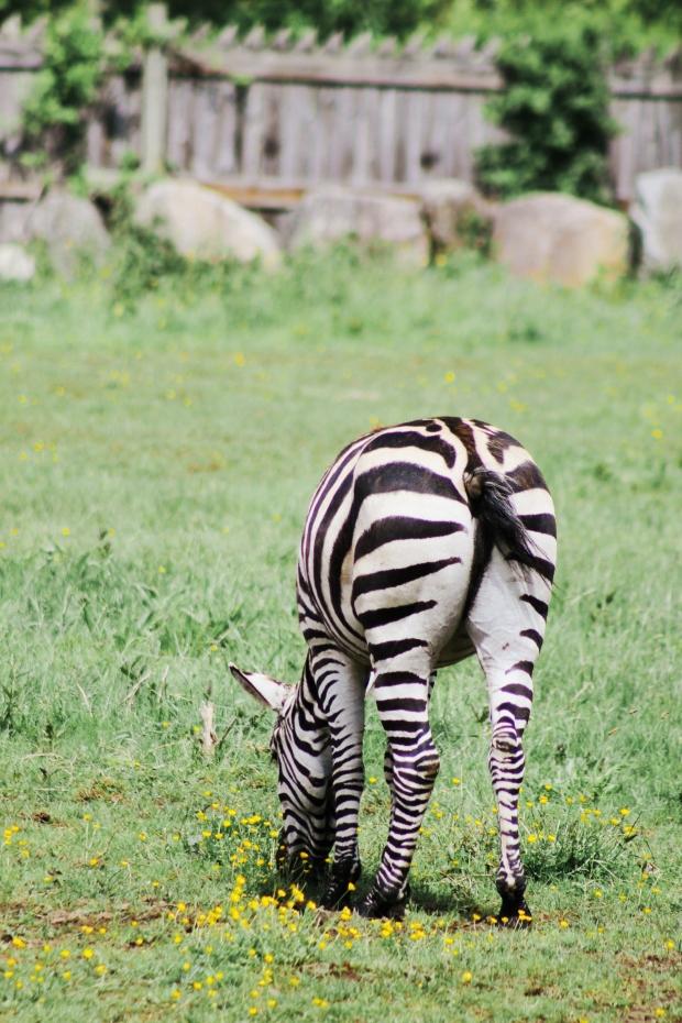 2Southwick Zoo 137-2