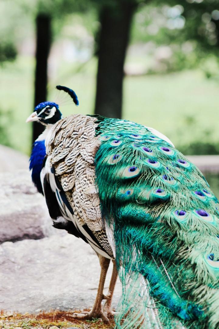 2Southwick Zoo 145-2