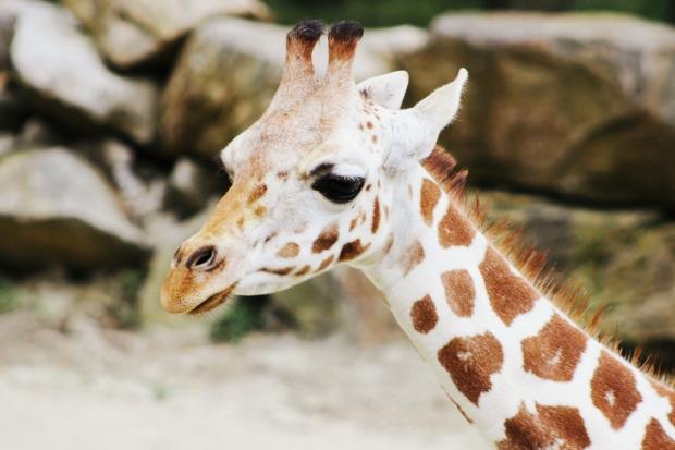 2Southwick Zoo 177-2