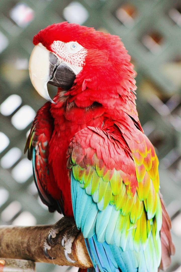 2Southwick Zoo 206-2