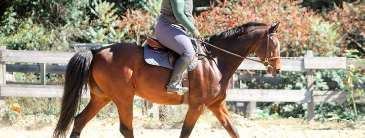 SmartPak Hadley Breeches | Product Review