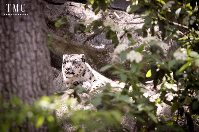 Zoo 134